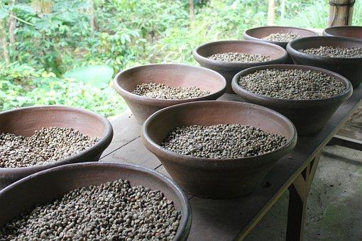 Coffee, Coffee Beans, Beans, Food, Drink, Bali