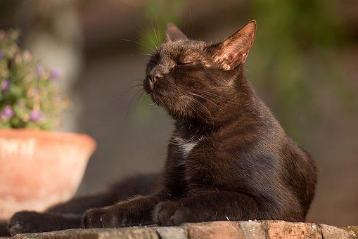Cat, Kitten, Black Cat, Animal, Feline, Cute, Pet
