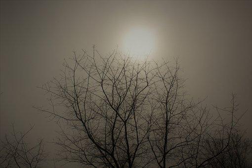 Fog, Foggy, Landscape, Haze, Trees, Morning, Mist