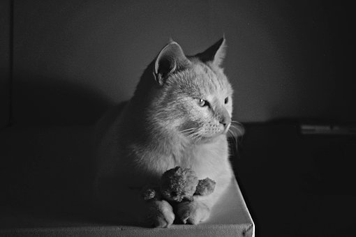 Cat, Black, Pet, Animal, Kitten, White, Fur, Eyes, Cute