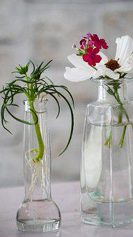 Flowers, Glass Vase, Plant, Decoration, Green