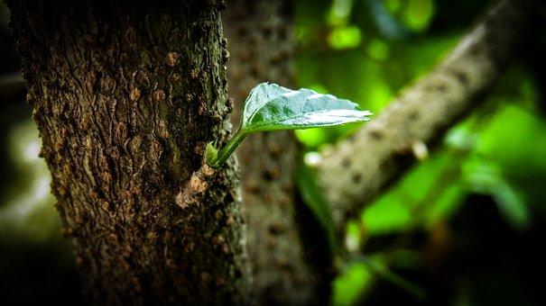 Leaf, Green, Garden, Greenery