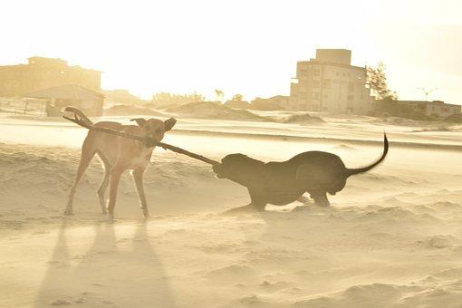 Dog, Mascot, Revelry, Joy, Beach, Dusk, Two, Animal