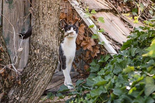 Cat, Kitten, Black, White, Sniffing, Smell, Animals
