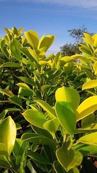 Nature, Outdoors, Green, Garden, Plant, Leaf, Sunshine