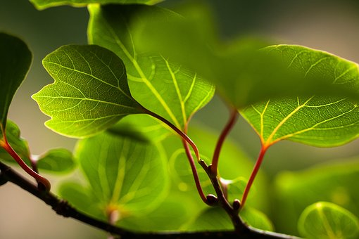 The Leaves, Green, Leaf, Plant