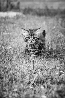 Kitten, Summer, Animal, Cat, Pet, Nature, Kitty