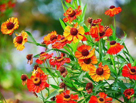 Flowers, Beauty, Nature, Color, Smell, Exotic, Tropical