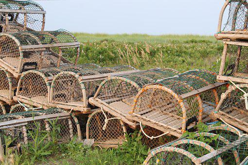 New Brunswick, Cage, Lobster, Fishing, Marine