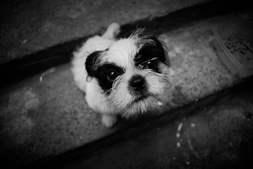 Dog, Photography, Animals, Pets, Friend, Education