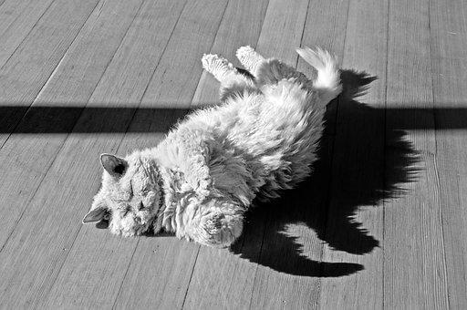 Cat, Animal, Ground, Roll, Sun, Selkirk Rex, Sheep Cat
