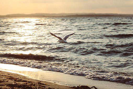 Sunset, Seagull, Sea, Water, Beach, Nature, Flying, Sky