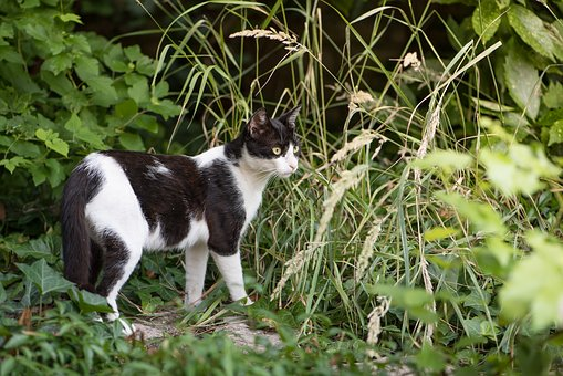 Cat, Kitten, Spotted Cat, Black, White, Animal, Pet