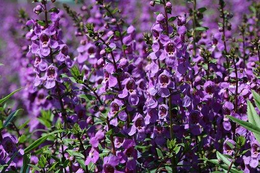 Flower Garden, Flower Festival, Tabitha, Beautiful