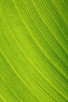 Khanna, Light, Leaf, Nature, The Leaves, The Shining