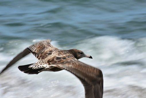 Animal, Sea, Wave, Bird, Wild Birds, Sea Gull, Seagull