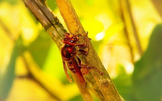 European Hornet, Insect, Work, Socket, Wood, Animals