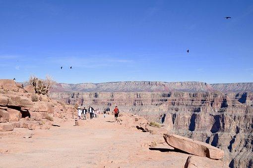Grand Canyon, Arizona, America, Usa, Birds, Blackbirds