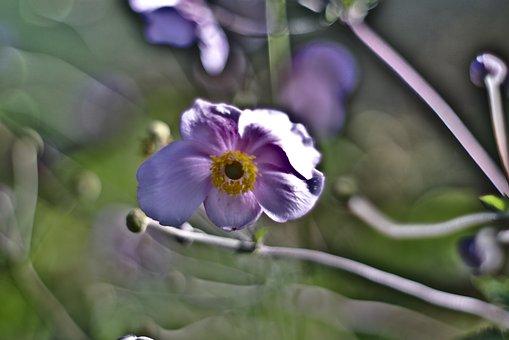 Ancient, Lens, Bokeh, Flower