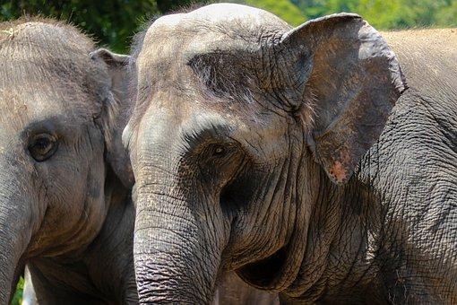 Animal, Elephant, Zoo