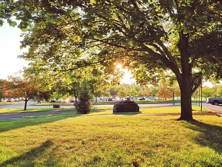 Cornell, Autumn, Autumn Scenery, Golden Yellow