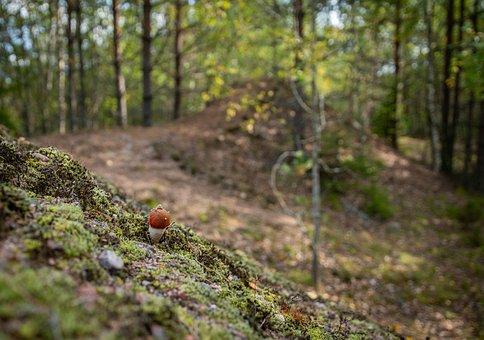 Mushroom, Forest, Autumn, Landscape, Orange-cap Boletus