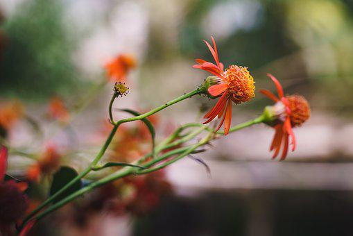 Flower, Bokeh, Vintage, Nature, Plant, Bloom, Blossom
