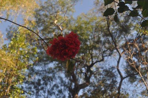 Flower Heart, Heart In Bloom, Love Is In The Air