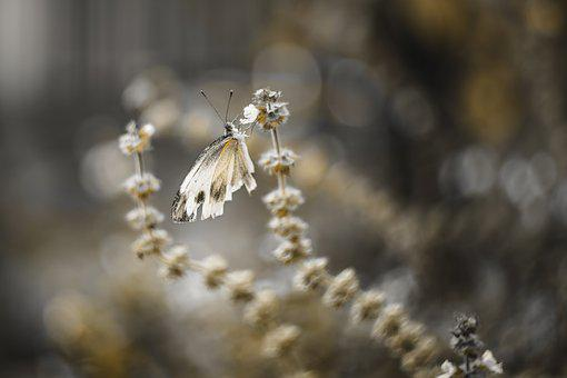 Butterfly, Flower, Garden, Nature, Insect, Animal