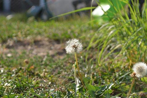 Meadow, Grass, Focus, Macro, Landscape, Summer, Green