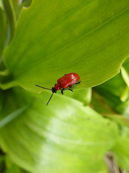 Biodiversity, Ladybug, Nature, Insect, Summer, Plants