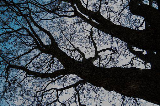 Tree, Purple, Bark, Landscape, Nature, Clouds