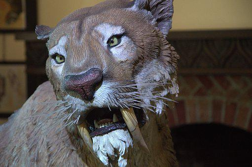 Lion, Fair, Feline