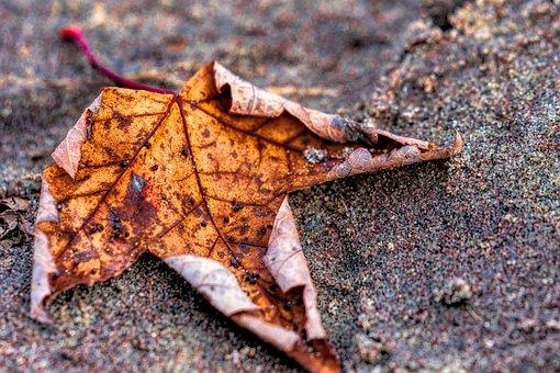 Maple Leaf Beach, Sand, Maple Leaf, Outdoor, Nature