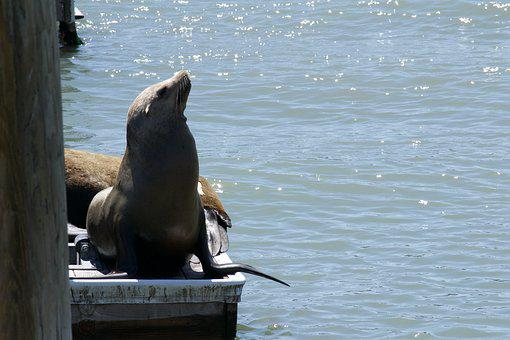 San Francisco Bay, Marine Life, Nature, Wildlife