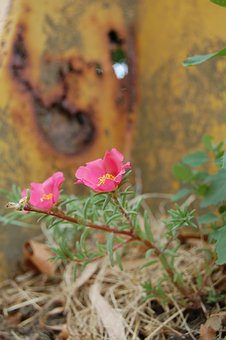 Flower, Oxide, Rusty, Nature, Rust
