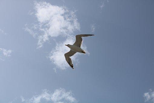 Seagull, Gabiota, Spain, Sea, Ocean, Sky, Beach