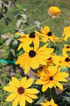 Plant, Flower, Nature, Petal, Park, Garden, Wild