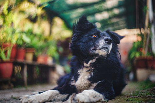 Dog, Pet, Animal, Portrait, Black, Brown, Canine, Puppy