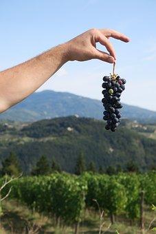 Wine, Tuscany, Vineyard, Italy, Grapes, Hand