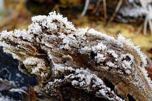 Log, Tree Root, Winter, Eiskristalle, Snow, Frost