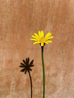 Flower, Yellow, Blossom, Bloom, Summer, Petals, Plant