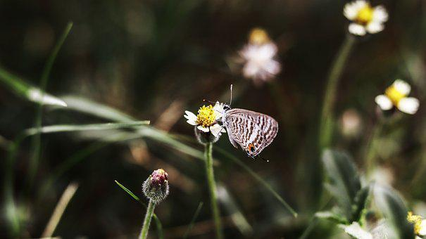 Butterfly, Nature, Flower, Insect, Animal, Colorful
