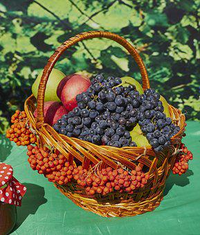 Grapes, Rowan, Apples, Fruit, Basket, Harvest, Autumn