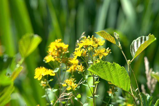 Flower, Yellow, Blossom, Bloom, Green, Meadow, Summer