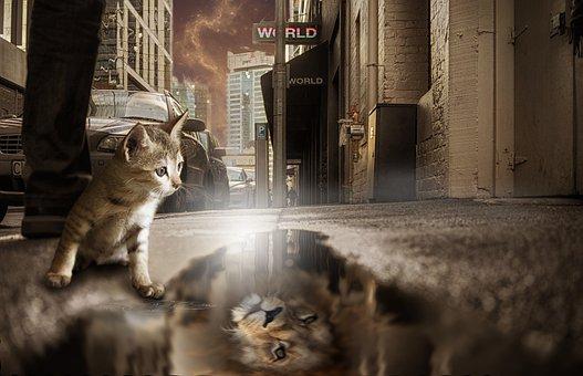 Lion, Cat, Mirror Image, Fantasy, Photomontage