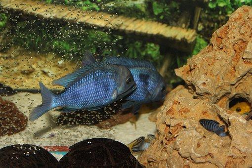 Aquarium, Fish, Chiclet Fish, Toys Hobbies