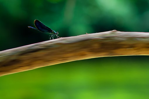 Nature, Animal, Insect, Dragonfly, Composing, Photoshop