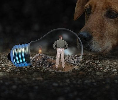 Man, Light Bulb, Dog, Face, Snout, Caught, Person, Lamp