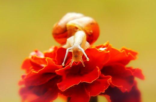 Snail Zaroślowy, Molluscs, Flower, Eyes, Look